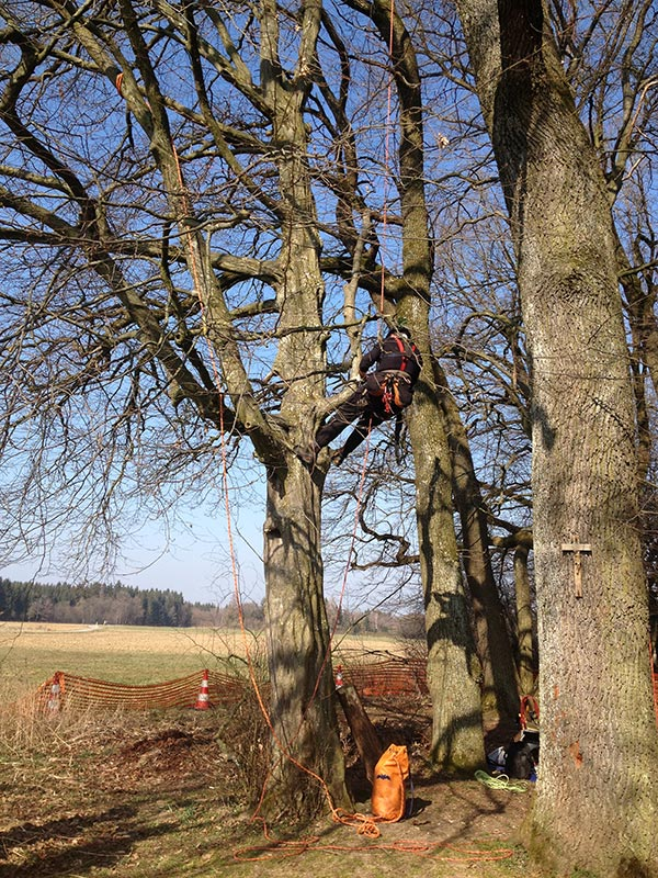 Totastentfernung mit Holz Nigl
