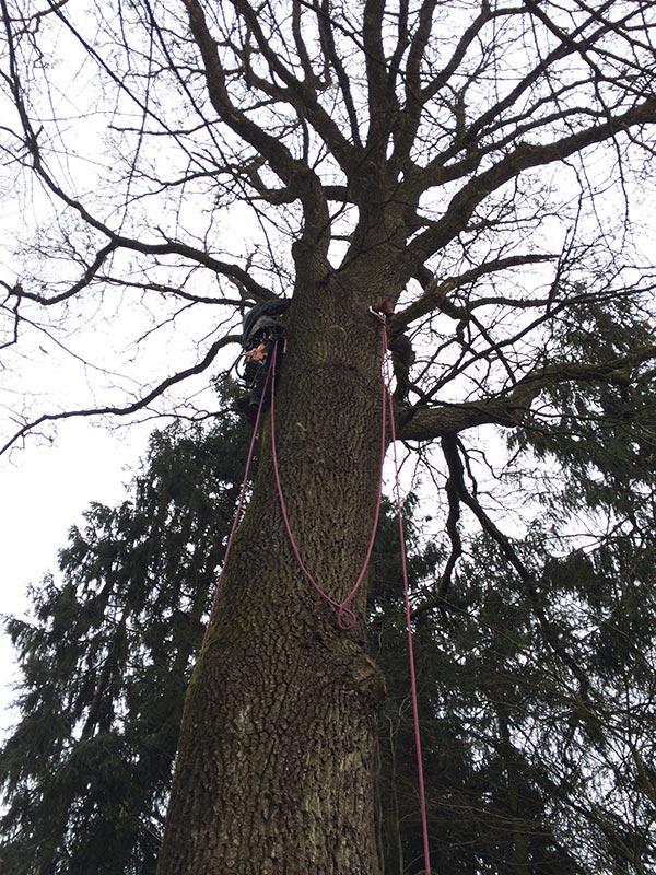 Pflege denkmalgeschützter Bäume mit Holz Nigl