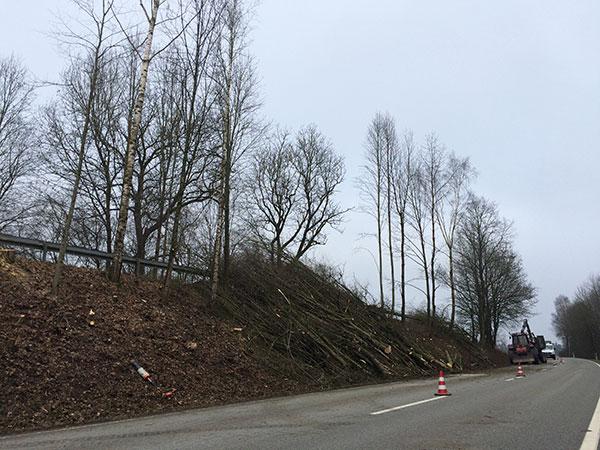 Fällen von Bäumen auf einer Böschung an einer Hauptstraße