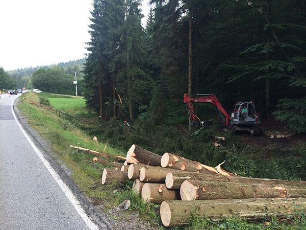 Baumstämme am Straßenrand nach den Forstarbeiten