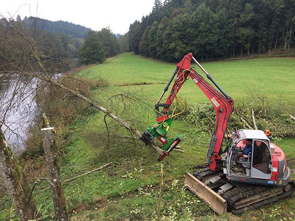 Baumfällung mit HIlfe eines Baggers