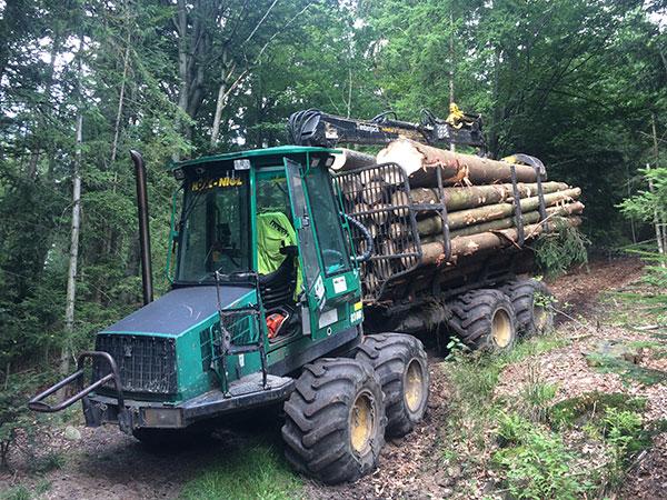 Abtransport von Baumstämmen im Wald