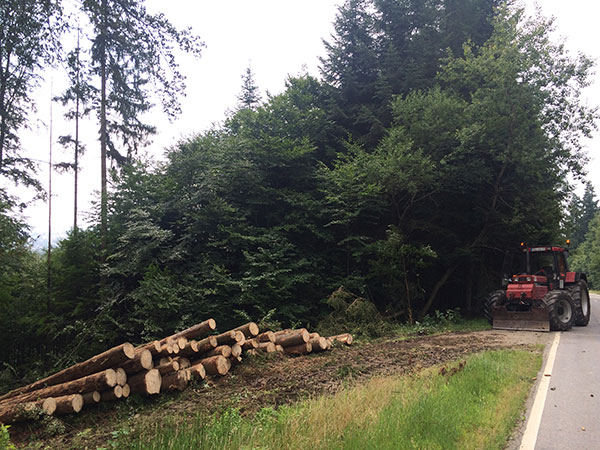 Baumstämme im Wald nach den Forstarbeiten