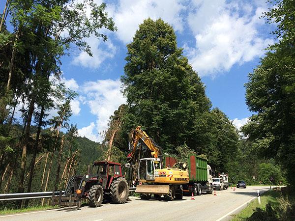 Forstarbeiten an einer Hauptstraße
