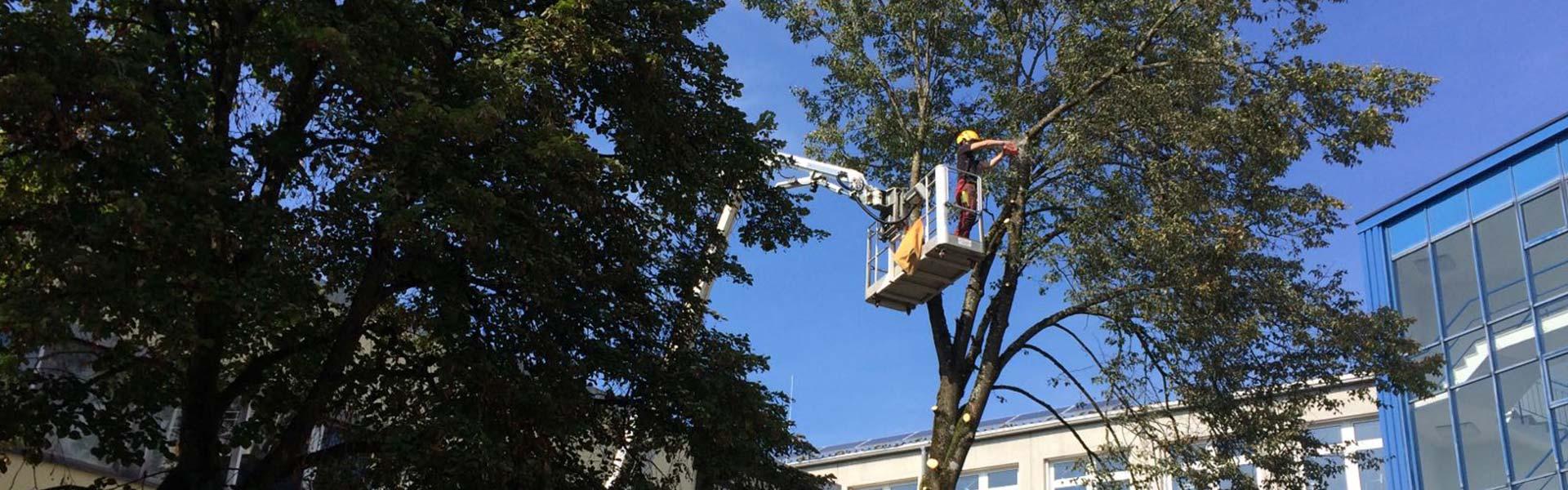 Rodungsarbeiten bei Passau